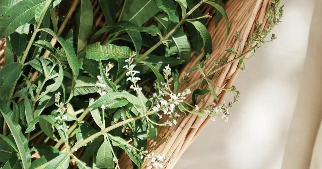 Herbaceous Bridal Bouquets