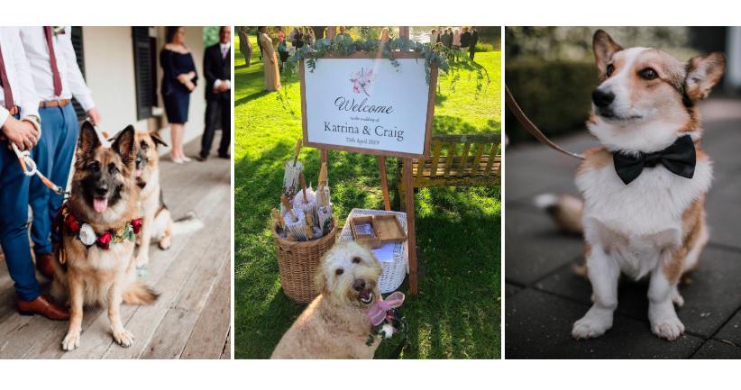 Все о домашних животных на свадьбе